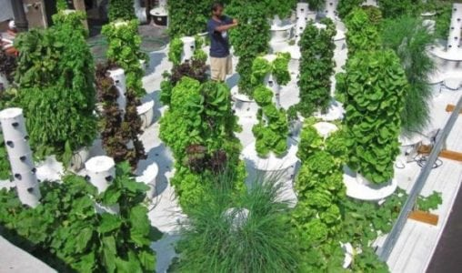 Funding Friday: Food Security for Puerto Rico