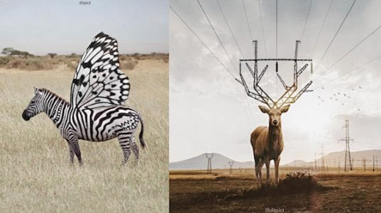Graphic Design Enthusiast Photoshops Surreal Images Of Animals In Fantasy Worlds