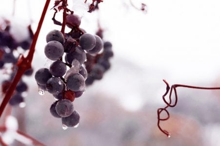 Differentiate Yourself and Your Offering Early or Sound Like Sour Grapes