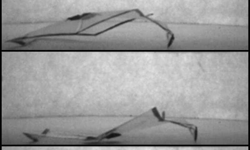 Soft robots utilize humidity gradient levels to generate signals