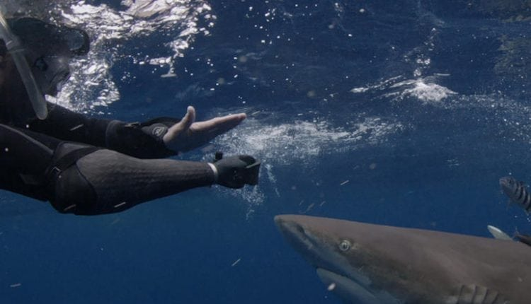 How sharks are no match for technology during Discovery Channel's Shark Week – Info Innovation