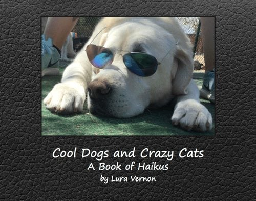 Cool Dogs and Crazy Cats – Info Entrepreneurship