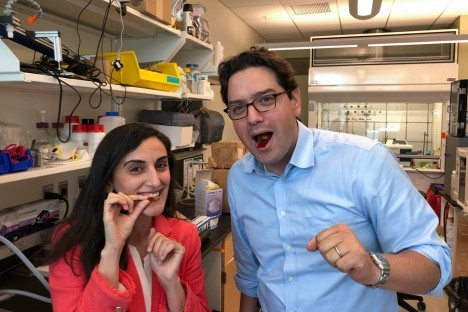 Flexible sensors can detect movement in GI tract   Social