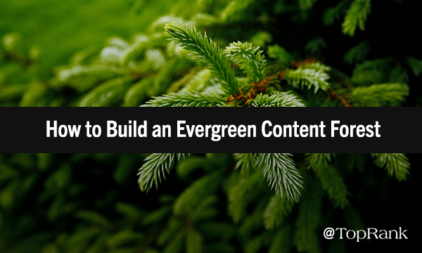 How to Build a Resilient Evergreen Content Marketing Forest | Marketing