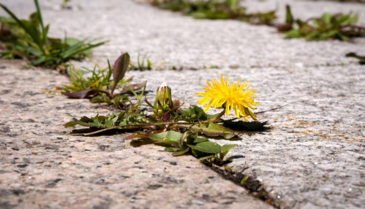 Pull Your Weeds · The Sales Blog | Sales