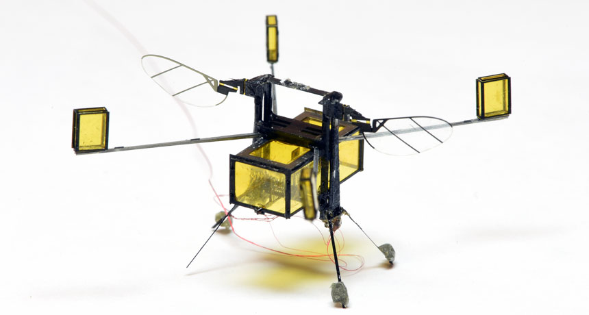 insect-inspired robot