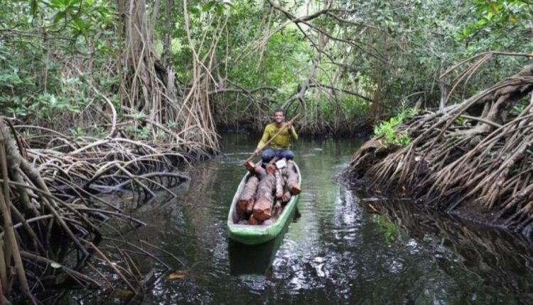 Apple to Invest in Mangrove Forest Restoration Project in Colombia | Mac
