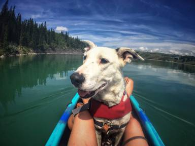 Bo was the first dog the organization took out for a water adventure. Thanks to widely shared social media posts, he was adopted within hours.