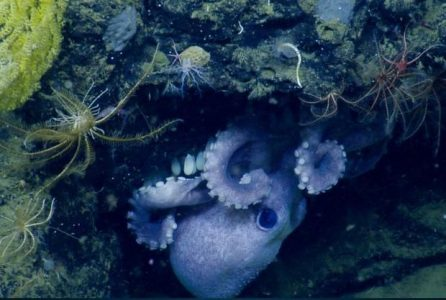 Interpreting deep-sea images with artificial intelligence AI  Artificial intelligence
