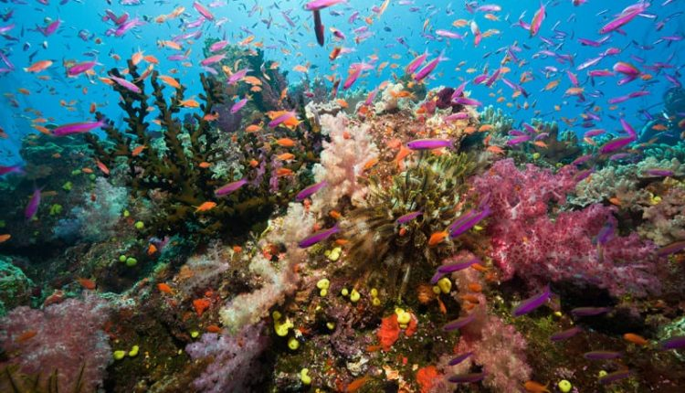 New Scientist Live: explore the soundscape of the deep sea | Artificial intelligence