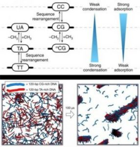 New insights into DNA phase separation | Digital Science