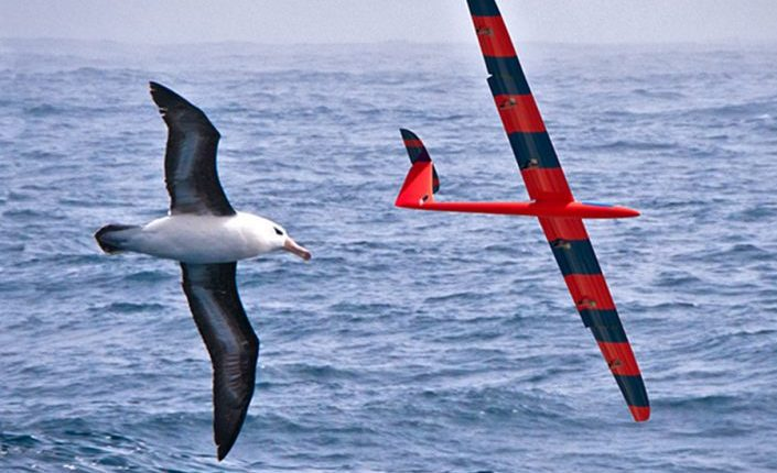 Physicists Train Robotic Gliders to Soar like Birds | Robotics