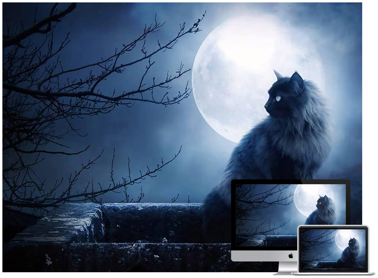 full-moon-kitty-wallpaper