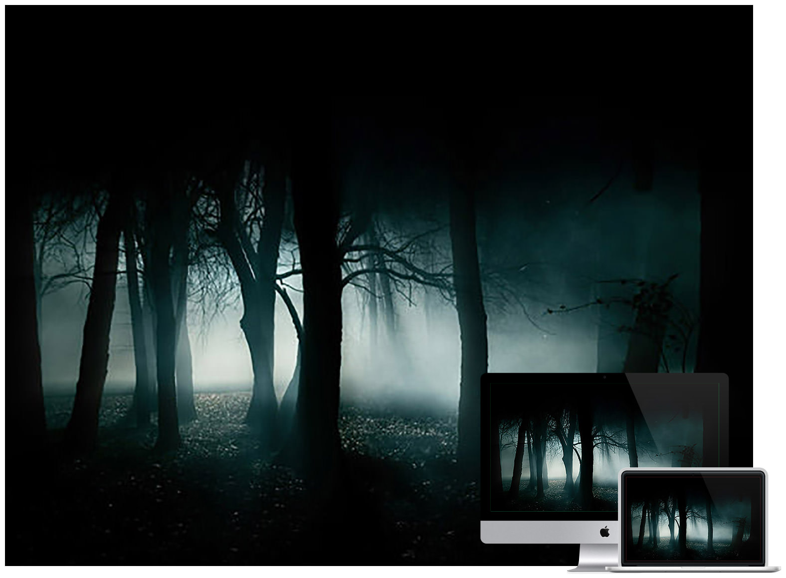 dark-forest-desktop-wallpaper