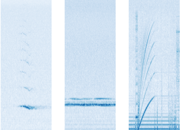 Google AI listens to 15 years of sea-bottom recordings for hidden whale songs | Tech Industry