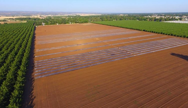 Sun and agricultural waste is using to control pests