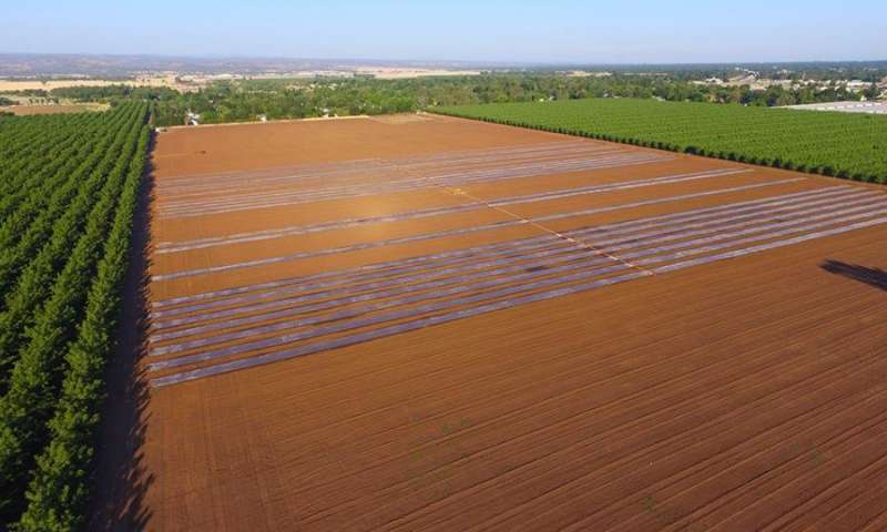 Using the sun and agricultural waste to control pests